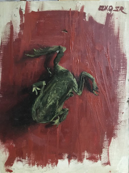 A dead frog