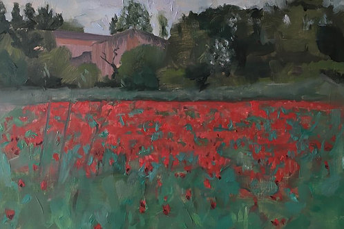 A Poppy field in Provence