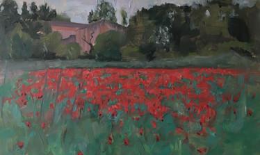 Poppy Fields in France