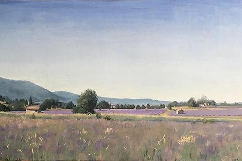Lavender fields near sault