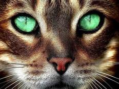 Les Chats !
