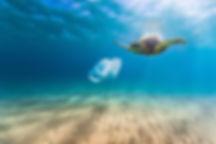 Turtle_Plastic.jpg