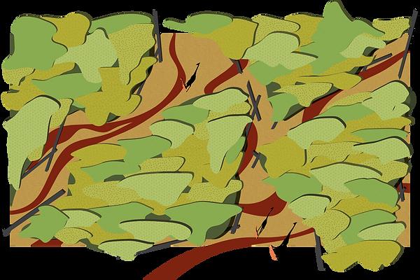 S4.1 acacia-01.png
