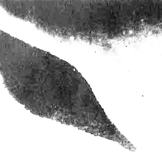 12 Дельфин 2.jpg