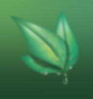 leaf-1629248_640.png