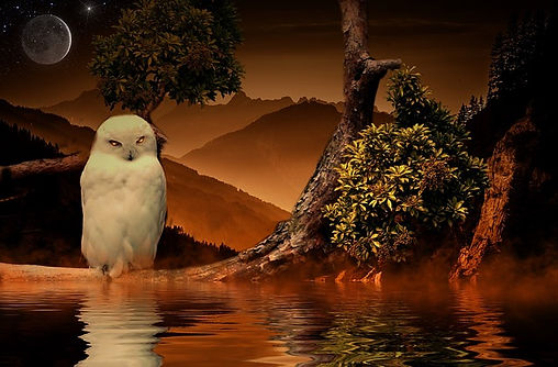owl-846842_640.jpg