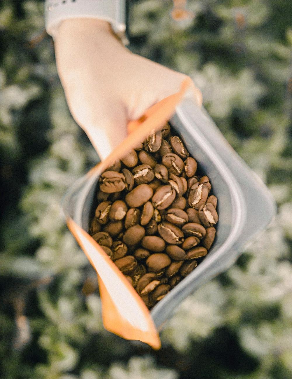 kawa ziarnista świeżo palona Ethiopia Sidamo