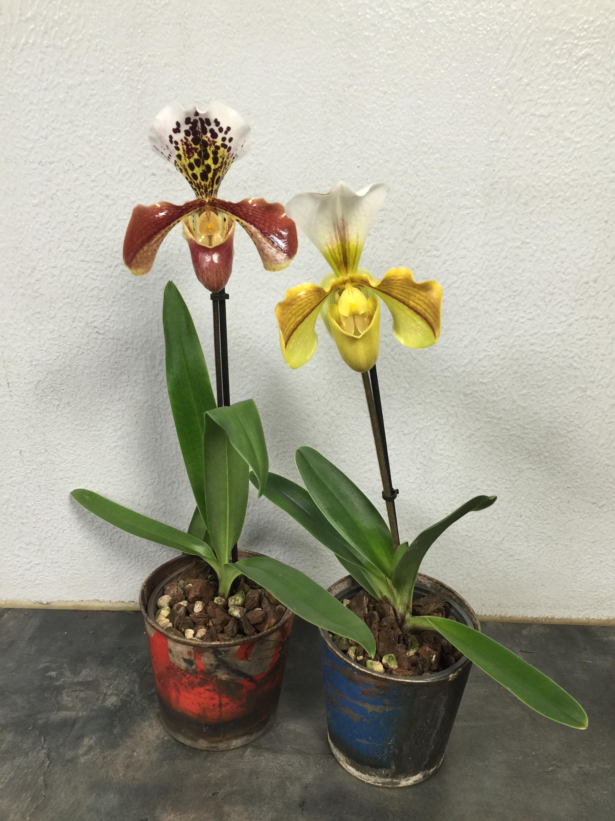 p a r a d o x e ° / entretien de plantes