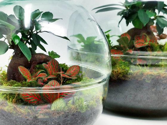° E C O S P H E R E ° terrarium