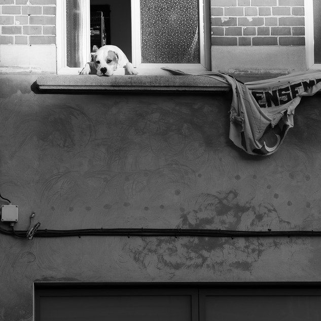 Loneliness, the dog at the window