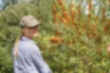 Jardin VIA Agro-Écologie