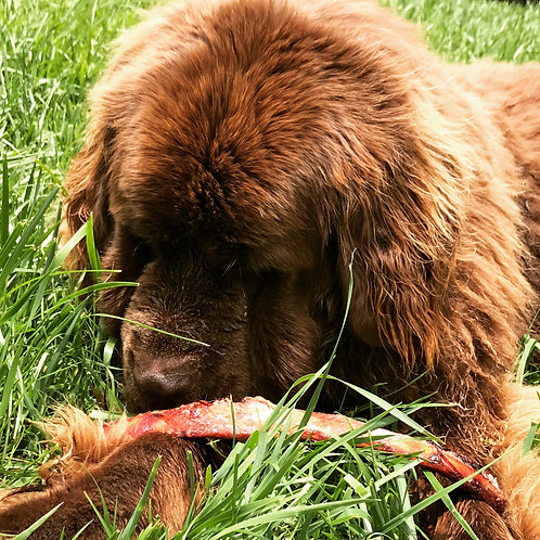 Bison Bones for dogs - per pound