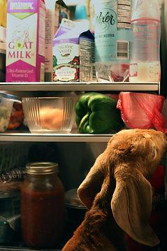 gypsy fridge 1.jpg