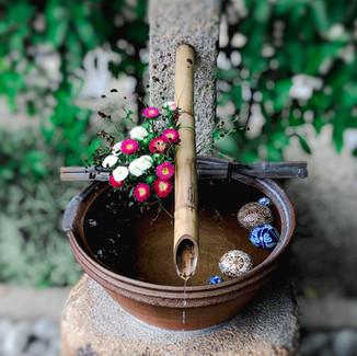 出雲大神宮 岡山 神社 手水舎 花手水 菊 ワレモコウ 浮き玉