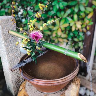 出雲大神宮 岡山 神社 手水舎 花手水 正月 迎春 初詣 蝋梅 ロウバイ 梅 菊 マム