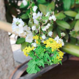 出雲大神宮 岡山 神社 手水舎 花手水 春 花桃 ハナモモ 桃 照手白 菜の花 ナノハナ なのはな