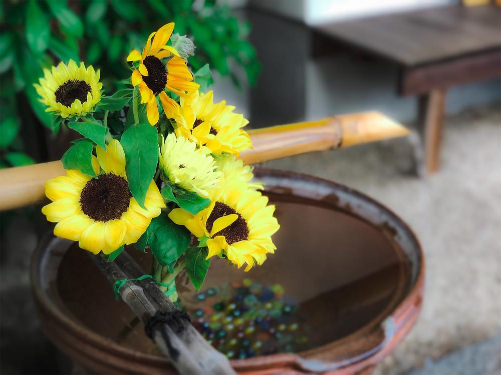 出雲大神宮 岡山 神社 地鎮祭 手水舎 花手水 ひまわり ヒマワリ 向日葵