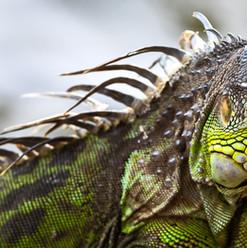 Wildlife-5.jpg