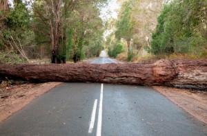 Roadblock Encounter