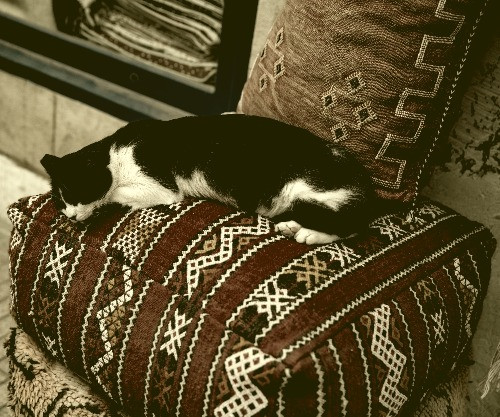 A cat asleep on an ottoman because it has the time from hiring cleaners