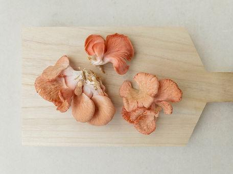 Funghi selvatici