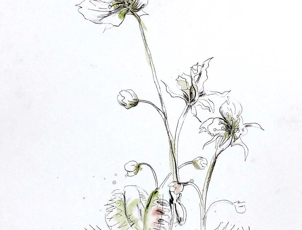'Venus flytrap'