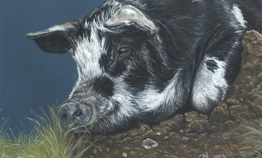 Porky Winks