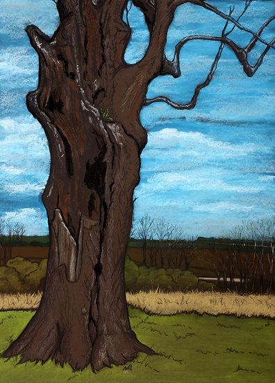 The Lightning Tree
