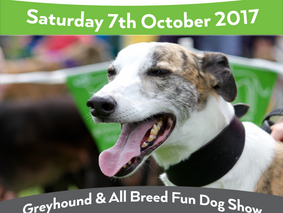 The Great Greyhound Gathering is nearly here!