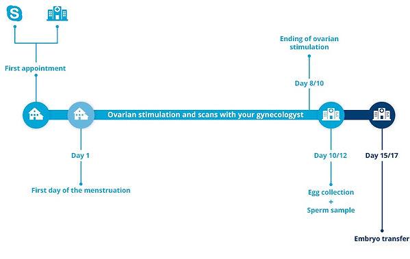 In Vitro Fertilisation (IVF) consists of three main phases