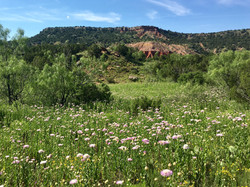 Palo Duro Canyon in the summer