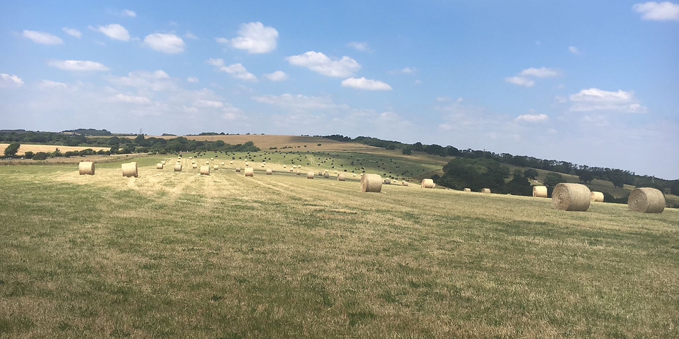 Hassocks to Lewes: Scenic South Downs Hike