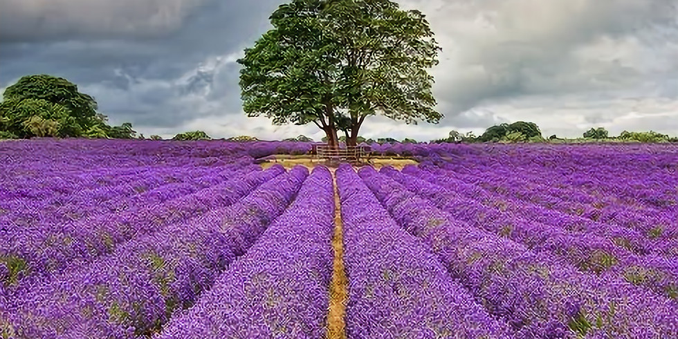The Lavender Fields Hike
