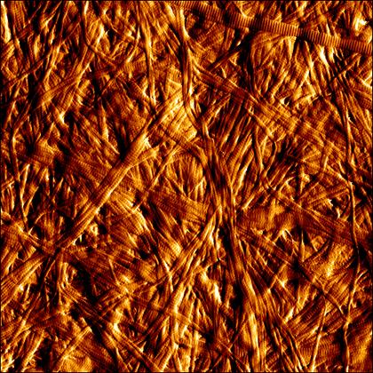 AFM image of collagen gel