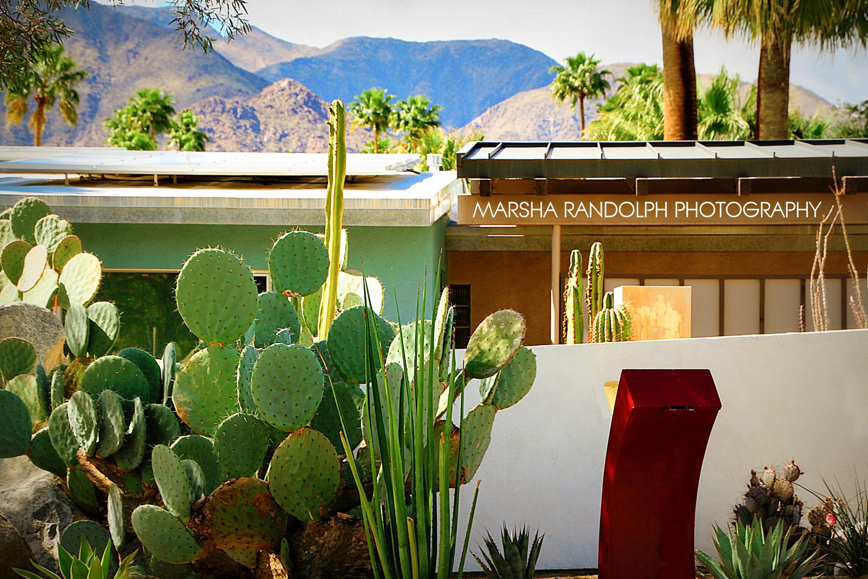 ARCHITECTURE_HOME_CACTUS_ Palm Springs _