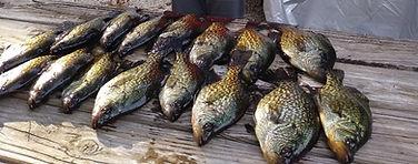 buoyfish.jpg