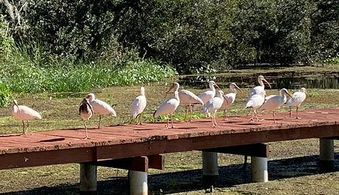 LakeRousseauP3D2.jpg