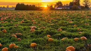 A Brilliant Time Had By All At The Galway Pumpkin Patch....