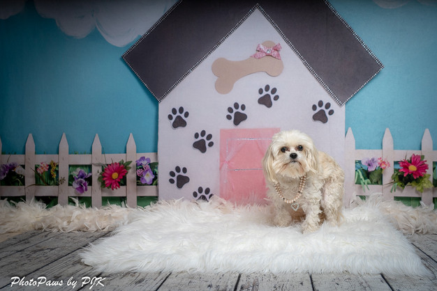 Pink Dog House