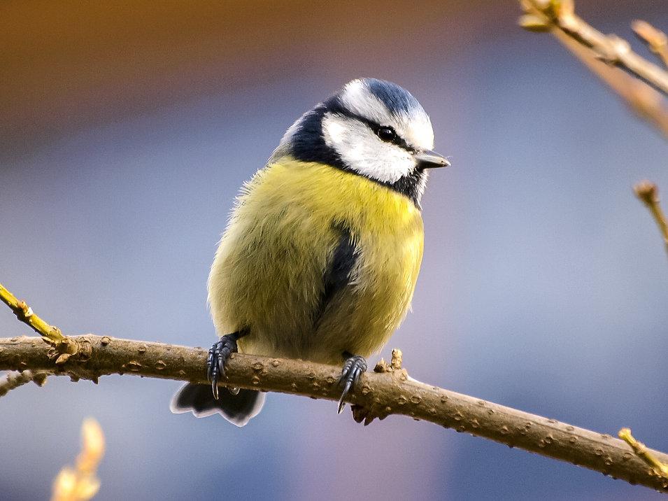 animal-avian-beak-459070.jpg