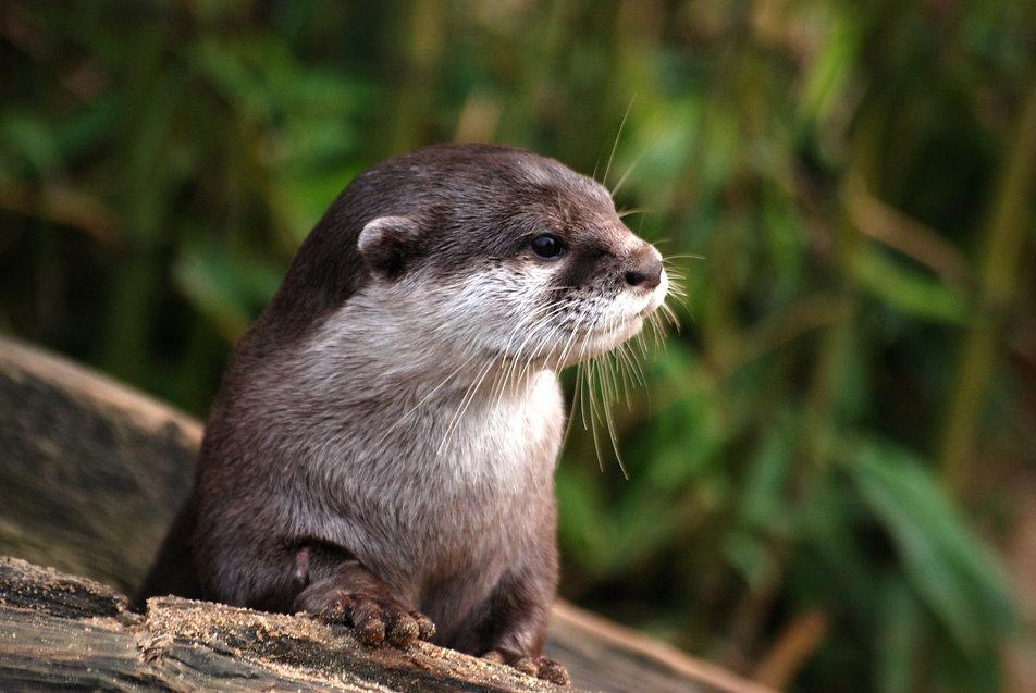 animal-close-up-cute-53510.jpg