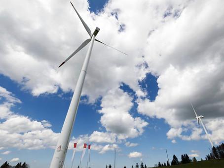 Parc éolien «Sur Grati» : Les organisations de protection de protection de la nature très inquiètes