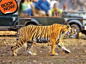 Golden Triangle Tour with Ranthambore | Delhi Agra Jaipur Ranthambore Tour Package