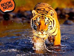 rajasthan wildlife tour packages from jaipur | Wildlife Safari tour in Rajasthan