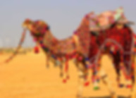 Delhi Agra Jaipur Tour Package, royal rajasthan tour package