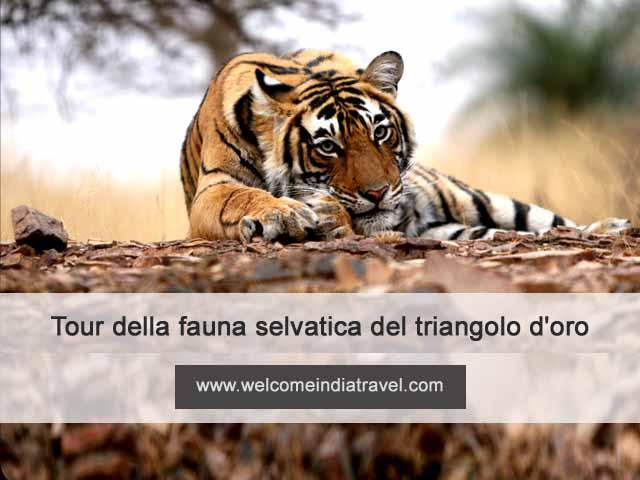 viaggio India Triangolo d'Oro con tigri