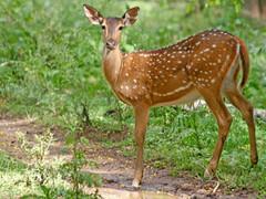 Wildlife Safari in Rajasthan