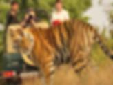 tripadvisor jaipur, tours from jaipur