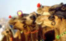 Pushkar Fair Tour Rajasthan, Rajasthan Tour with Pushkar