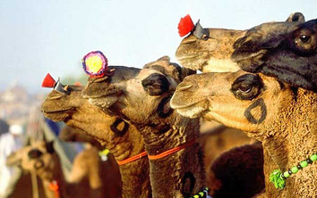 Pushkar Fair Tour Rajasthan, Rajasthan Tour with Pushkar